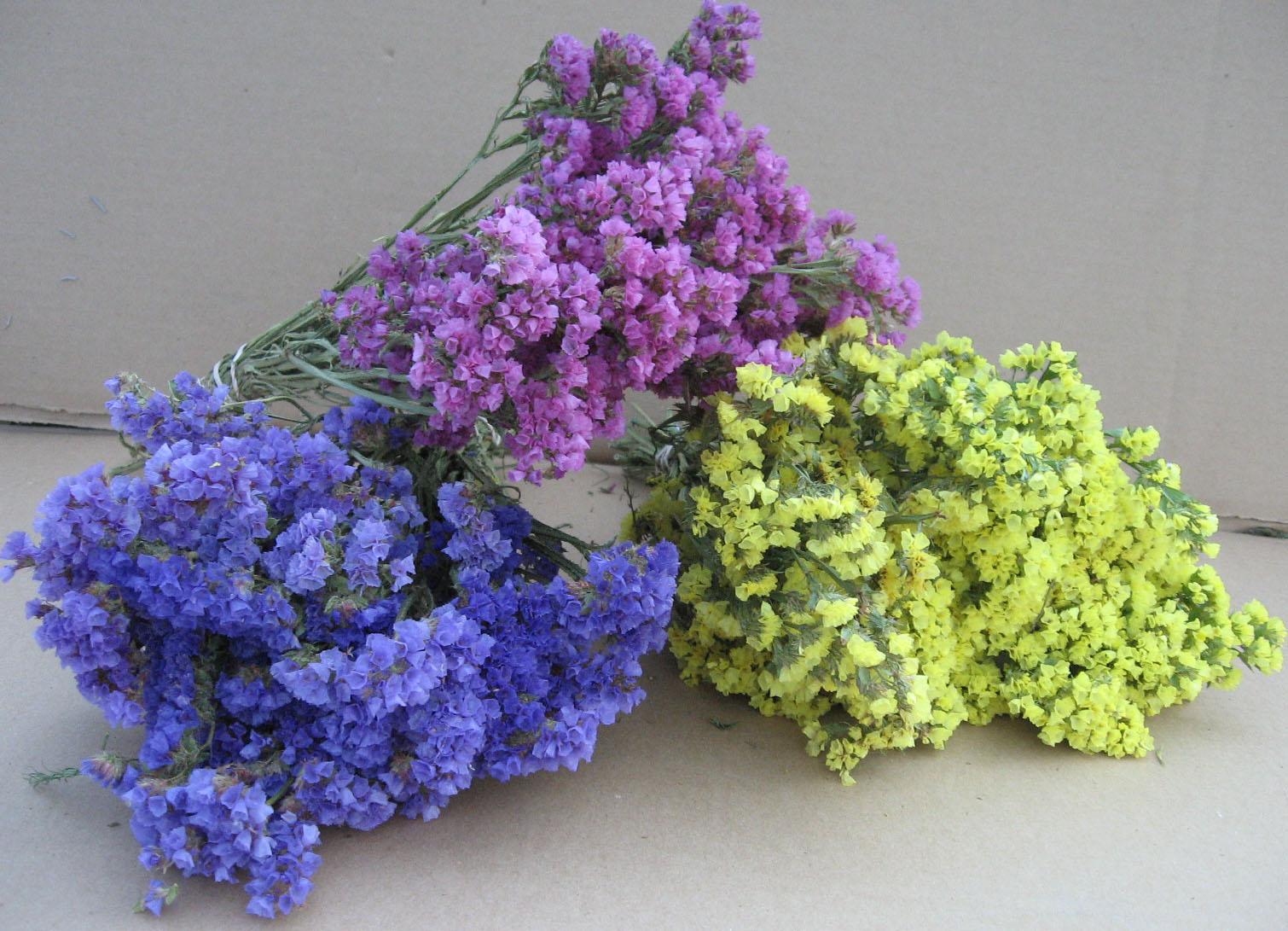 driedflowersm